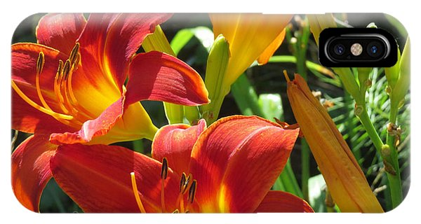 Day Lily 2 IPhone Case