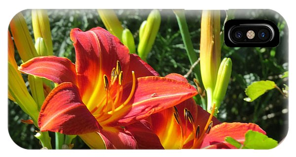 Day Lily 4 IPhone Case