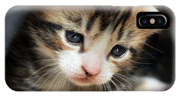 Daydreamer Kitten IPhone Case