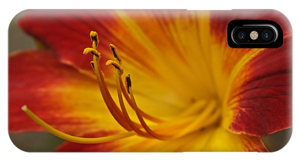 Daylily Close Up II IPhone Case