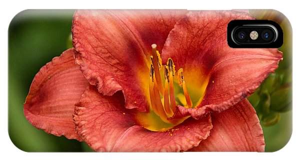Daylily Intensity IPhone Case