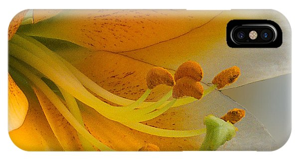 Gold Daylily Close-up IPhone Case