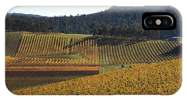 golden vines-Victoria-Australia IPhone Case