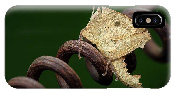 Grasshopper iPhone Case - Dead Leaf Grasshopper Nymph by Melvyn Yeo
