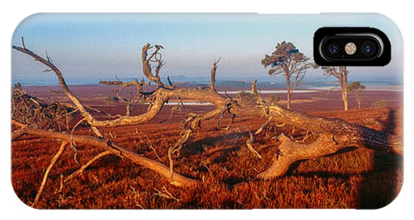 Upland iPhone Case - Dead Trees, Southern Uplands by Panoramic Images