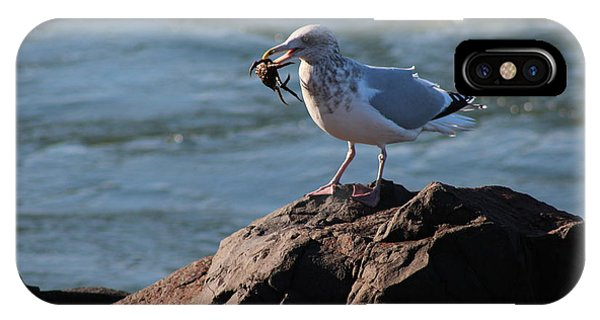 Death By Seagull IPhone Case