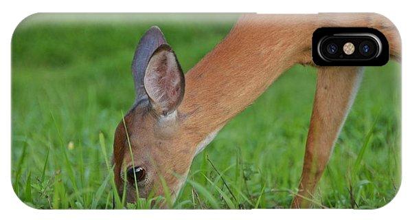 Deer 25 IPhone Case