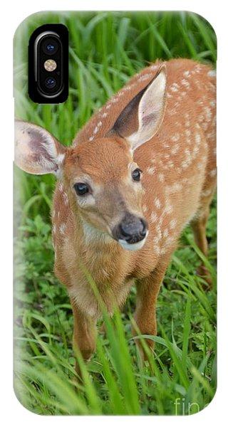 Deer 42 IPhone Case