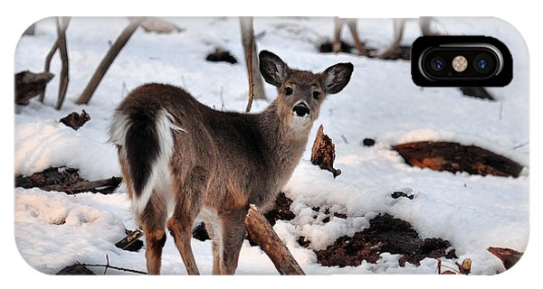 Deer And Snow IPhone Case