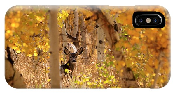 Deer In Aspen IPhone Case