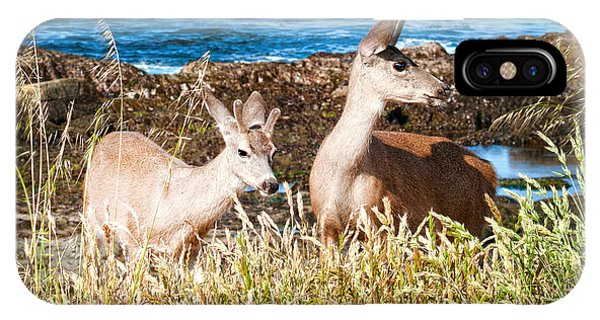 Deer On The Beach At Point Lobos Ca IPhone Case