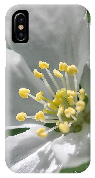 Delcate Widflower With Beautiful Stamen IPhone Case