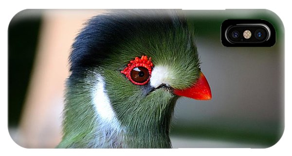 Delicate Green Turaco Bird With Red Beak White Patches And Black Crown IPhone Case