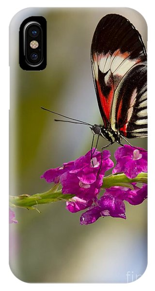 delicate Piano Key Butterfly IPhone Case