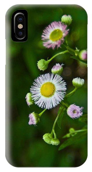 Delicate Pla 528 IPhone Case