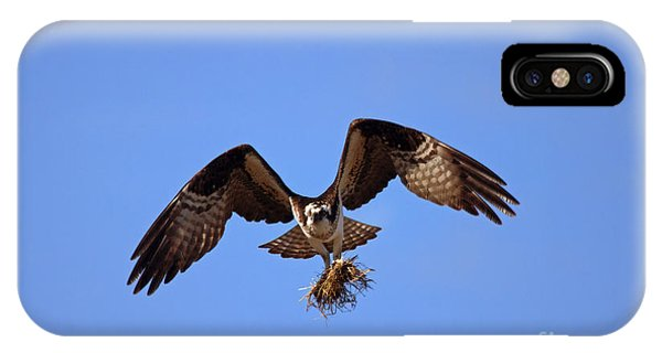Ospreys iPhone Case - Delivery By Air by Mike  Dawson