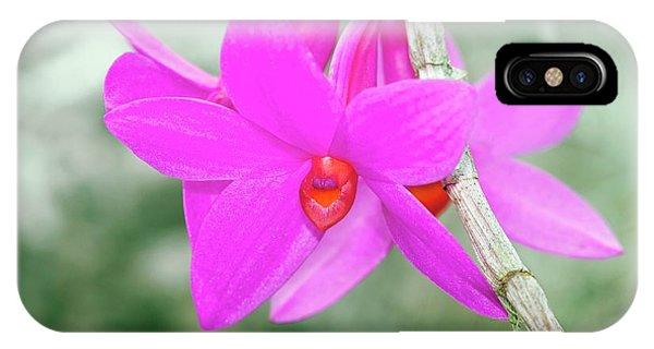 Dendrobium Glomeratum 'qingyu' Phone Case by Sam K Tran/science Photo Library