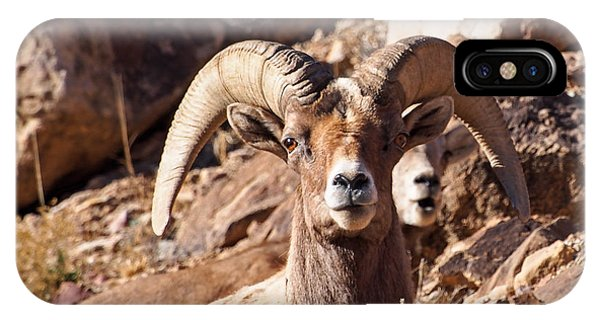 Desert Bighorn Sheep IPhone Case