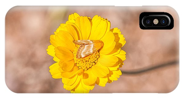 Pterygota iPhone Case - Desert-marigold Moth by Rich Leighton