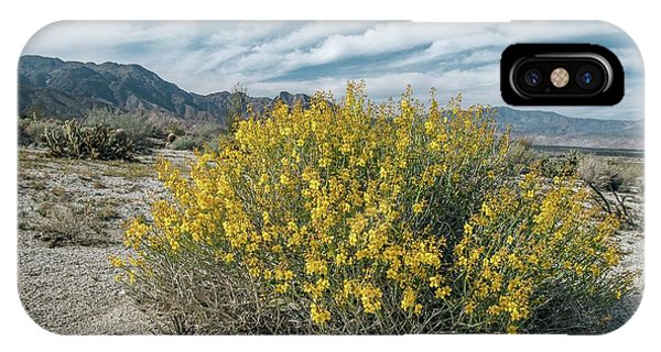 Desert Senna (senna Armata) In Flower Phone Case by Bob Gibbons/science Photo Library