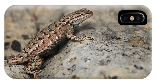Desert Spiny Lizard IPhone Case