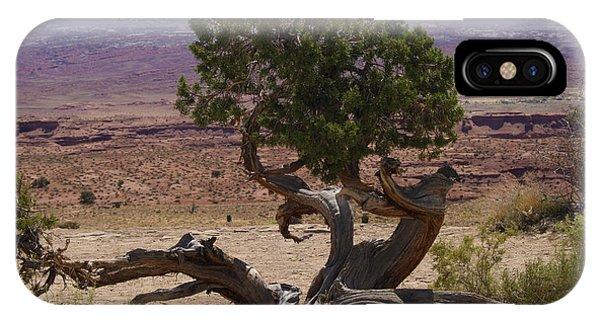 Desert Tree IPhone Case