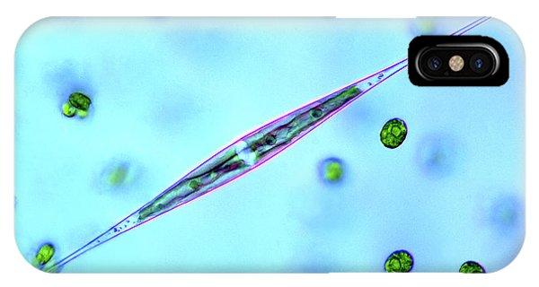 Aquatic Plants iPhone Case - Desmid And Chlorophytes by Marek Mis