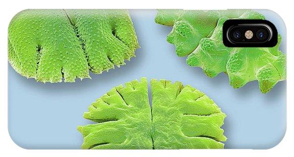 Aquatic Plants iPhone Case - Desmids by Steve Gschmeissner