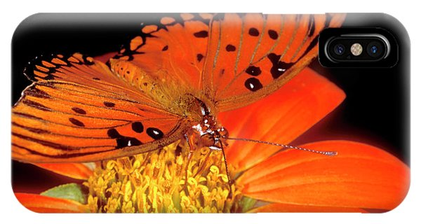 Agraulis Vanillae iPhone Case - Detail Of Captive Gulf Fritillary by Jaynes Gallery