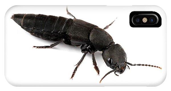 Devil's Coach Horse Beetle Phone Case by Alex Hyde