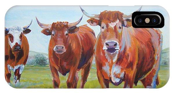 Devon Cattle IPhone Case