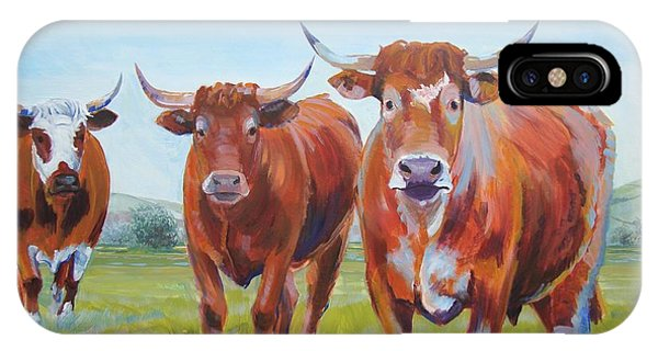 Devon Cattle IPhone Case