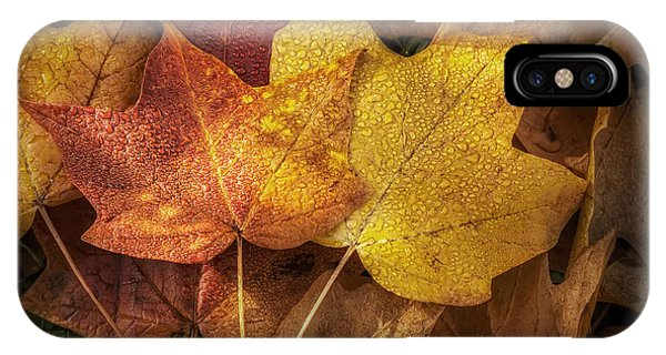 Amber iPhone Case - Dew On Autumn Leaves by Scott Norris