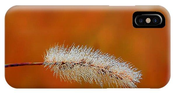 Dew On Grass Blade In Morning Phone Case by Dan Friend