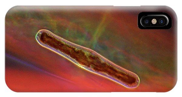 Diatoms iPhone Case - Diatom by Marek Mis