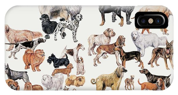 Different Breeds Of Dogs Phone Case by Deagostini/uig/science Photo Library