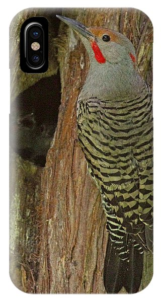 Northern Flicker iPhone Case - Dinner Time by Randy Hall