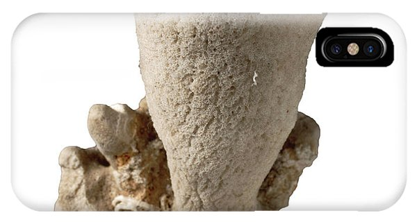 North London iPhone Case - Discodermia Sponge Specimen by Natural History Museum, London/science Photo Library