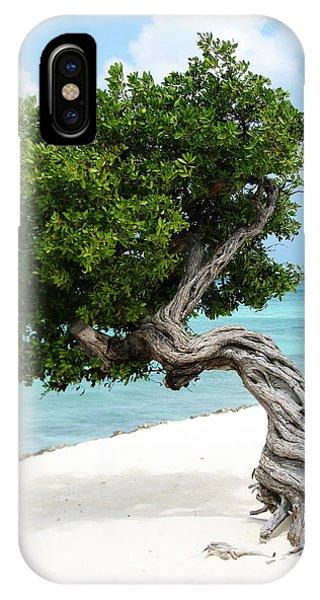 Divi Divi Tree In Aruba IPhone Case
