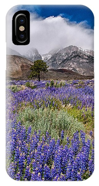 Division Creek Lupine IPhone Case