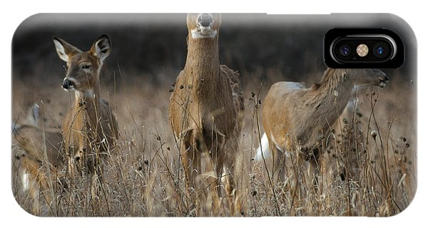 Doe And Yearlings IPhone Case