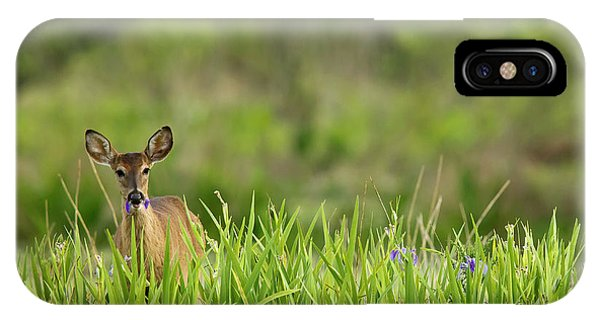 White Tailed Deer iPhone Case - Doe Feeding On Prairie Iris, Grimes by Maresa Pryor