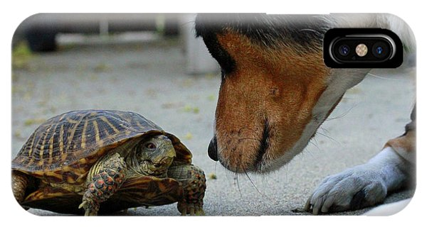 Dog And Turtle IPhone Case