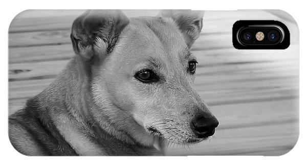 Dog In Black And White One IPhone Case