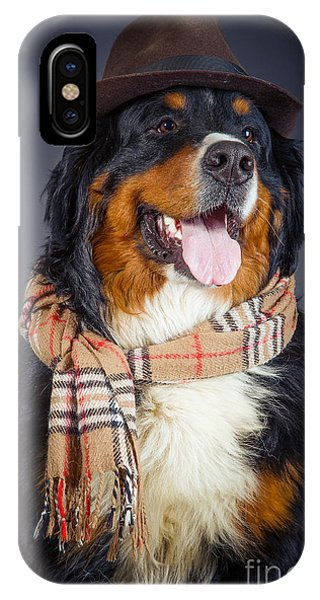 Bernese Mountain Dog iPhone Case - Dog In Scarf And Hat by Aleksey Tugolukov