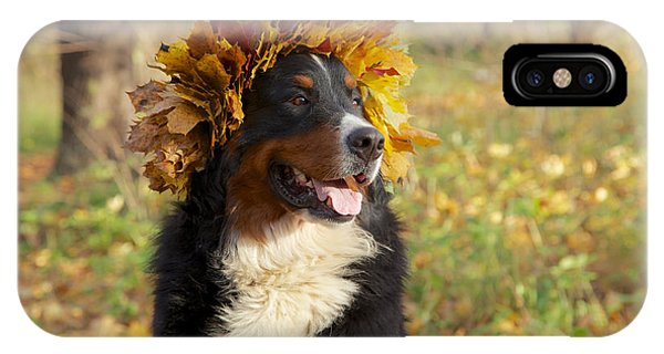 Bernese Mountain Dog iPhone Case - Dog In Yellow Leaves Crown by Aleksey Tugolukov