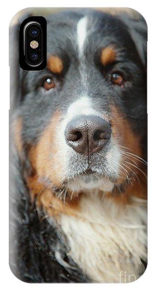 Bernese Mountain Dog iPhone Case - Dog Looks At Camera by Aleksey Tugolukov
