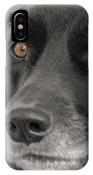 Dog Peek A Boo IPhone Case