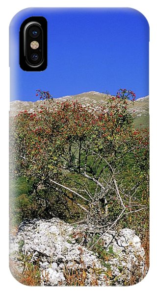 Blue Berry iPhone Case - Dog Rose (rosa Canina) by Bruno Petriglia/science Photo Library