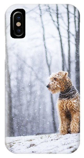 Dog Sits Under The Snowfall IPhone Case